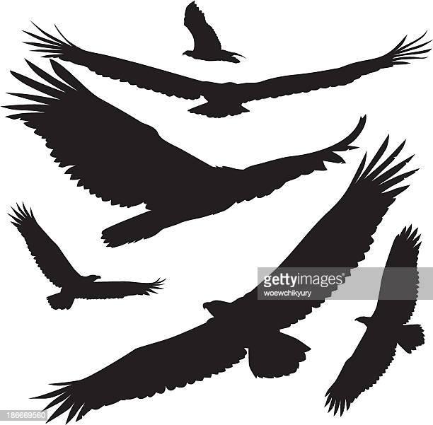 vector silhouettes eagle - hawk bird stock illustrations, clip art, cartoons, & icons