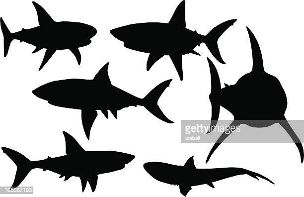 vector silhouettes of various sharks in black and white - sharks stock illustrations