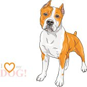 vector sketch dog American Staffordshire Terrier breed