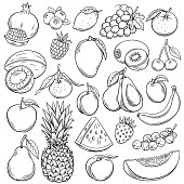 Vector sketch fruits