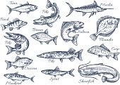 Vector sketch icons of fish of river or sea