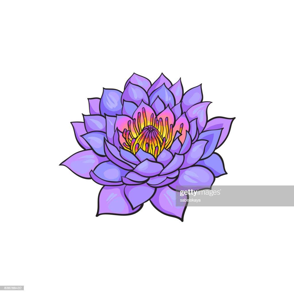 Vector sketch lotus flower blossom blooming vector art getty images vector sketch lotus flower blossom blooming vector art mightylinksfo