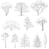 vector sketch of trees