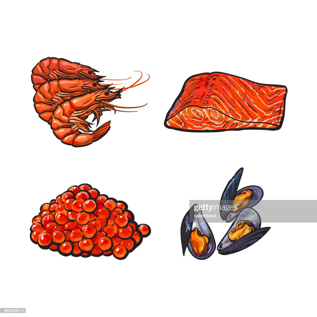vector sketch seafood set isolated