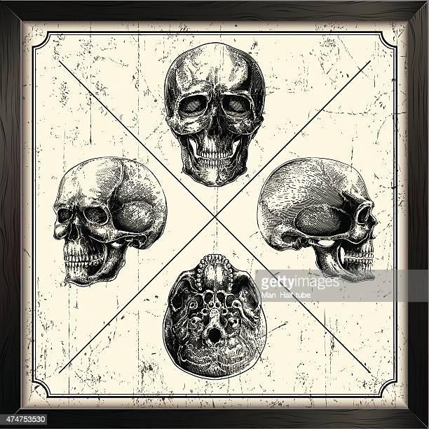 vektor-set mit totenkopf - 19. jahrhundert stock-grafiken, -clipart, -cartoons und -symbole