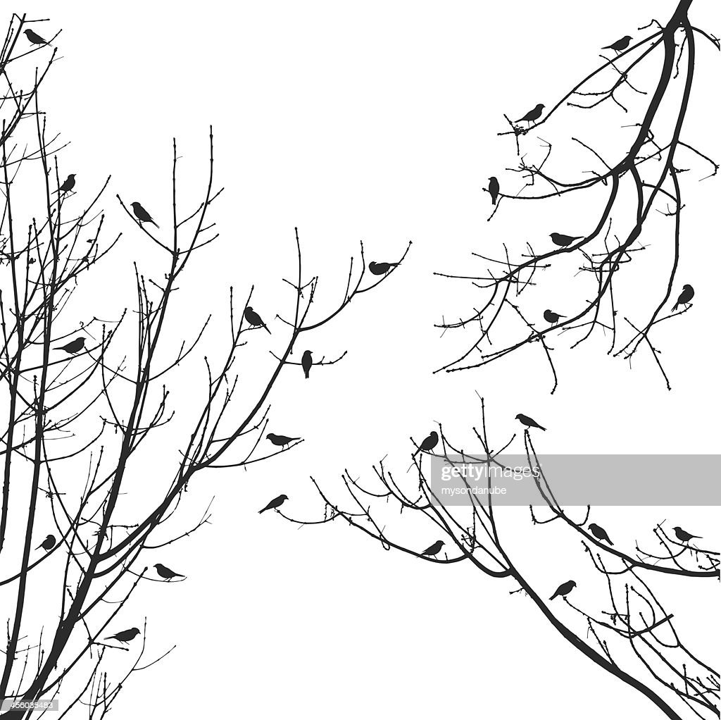 vector sparrow flock on tree branches