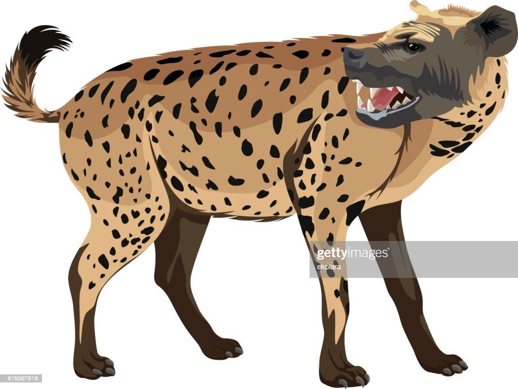vector spotted hyena illustration