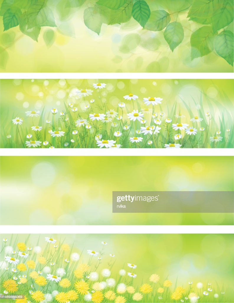 Vector  spring nature banners, birch  tree leaves,  dandelion and chamomile.
