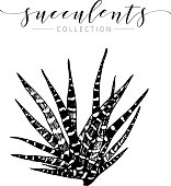 Vector succculent. Hand drawn botanical art isolated on white background. Floral illustration.