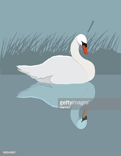 Vector Swan