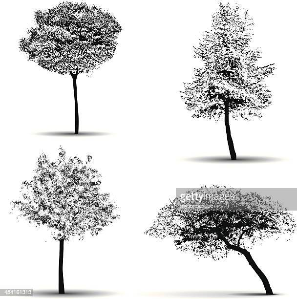 vector tree silhouettes - ash stock illustrations, clip art, cartoons, & icons