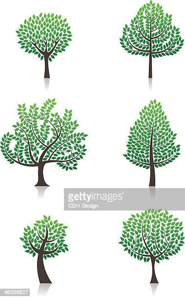 vector trees - cedar tree stock illustrations, clip art, cartoons, & icons