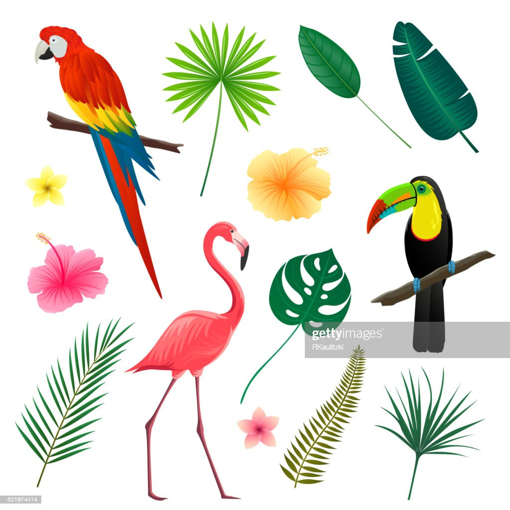 Vector Tropical Leaves, Flowers and Birds