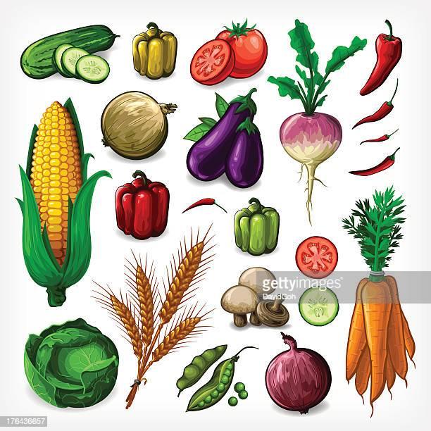 Vector Vegetables Set - Complete