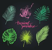 Vector vintage palm leaves illustration. Tropic paradise lettering with hand drawn collection of jungle foliage and orchid flower. Exotic leafage background.