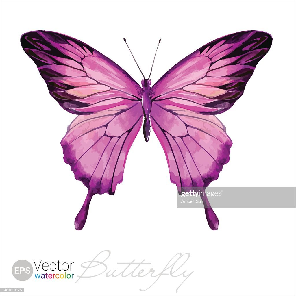 Vector Watercolor Butterfly The Ulysses butterfly