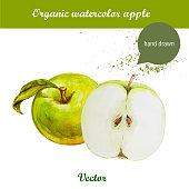 Vector watercolor hand drawn green apples with leaf