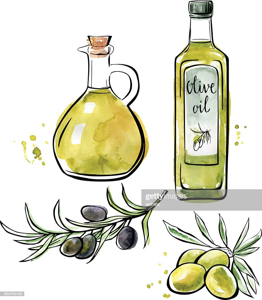 Vector watercolor illustration of olive oil