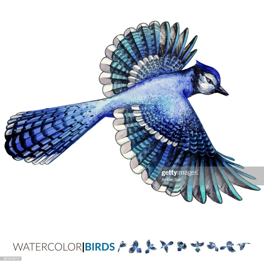 Vector watercolor illustration of the Blue Jay tropical bird flying