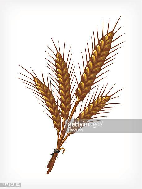 vector wheat - bran stock illustrations, clip art, cartoons, & icons