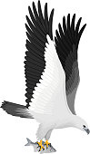 vector white bellied sea eagle