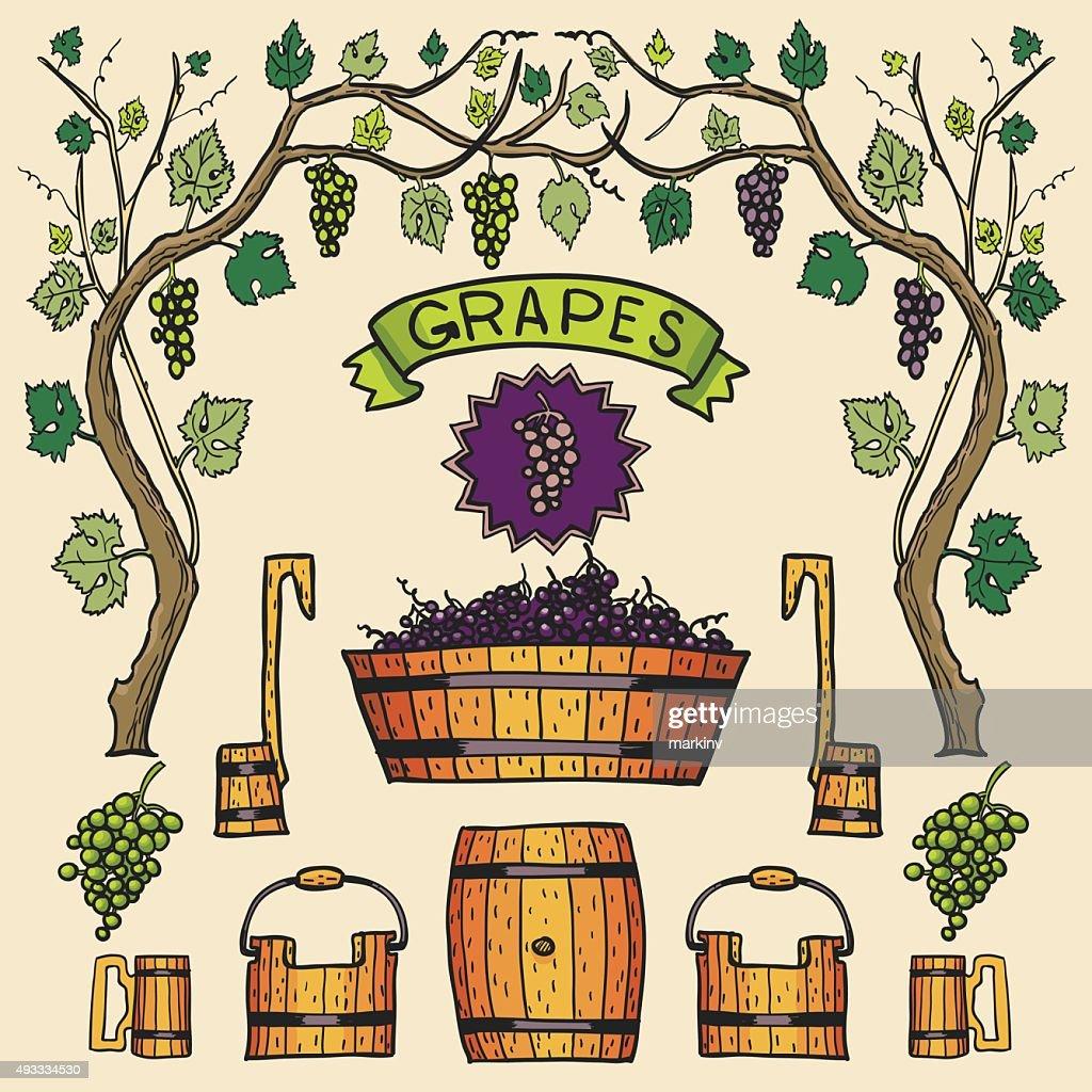 Vector wine grapes illustrations Winemaking design.