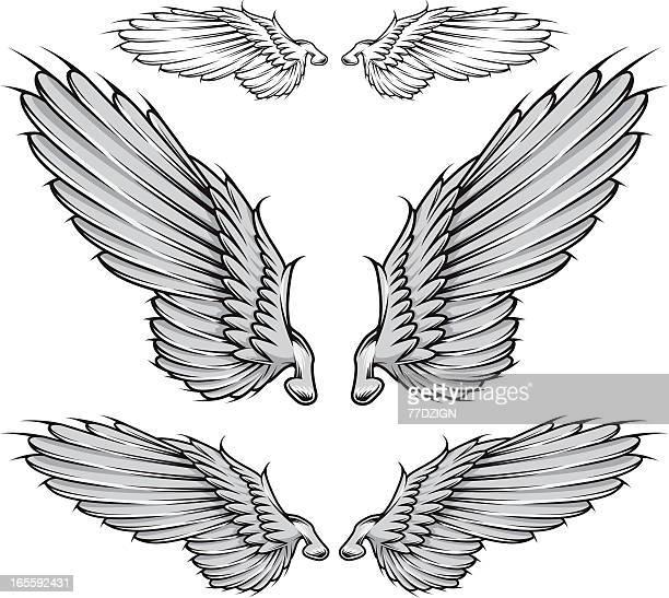 vector wing