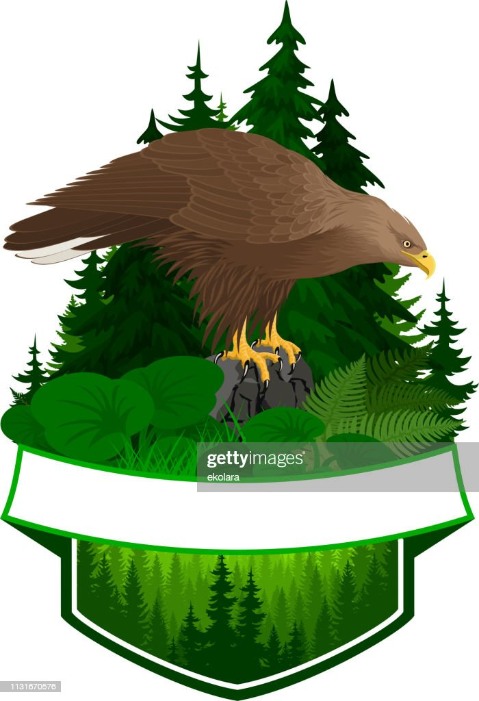 vector woodland emblem with white-tailed eagle