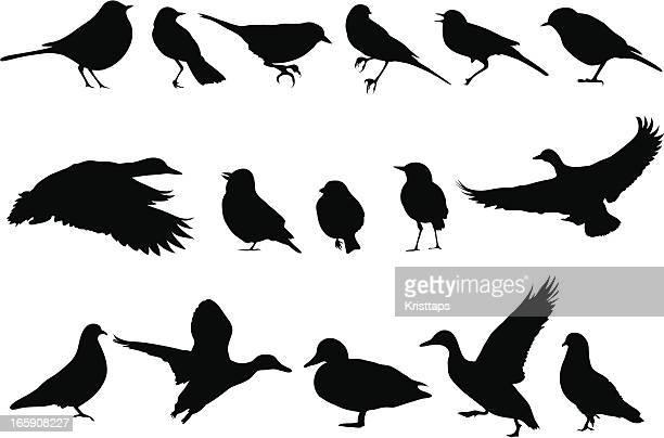 vectorial illustrations of various bird silhouettes - duck bird stock illustrations, clip art, cartoons, & icons