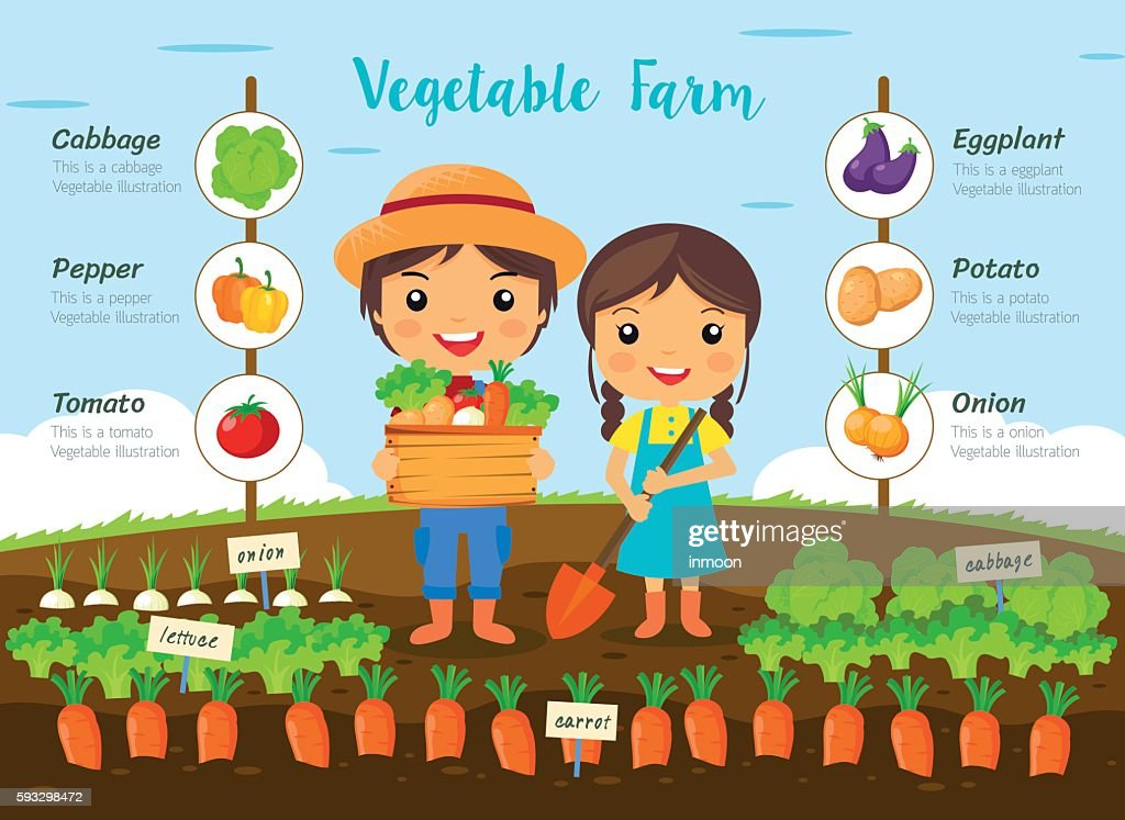 Vegetable farm infographic