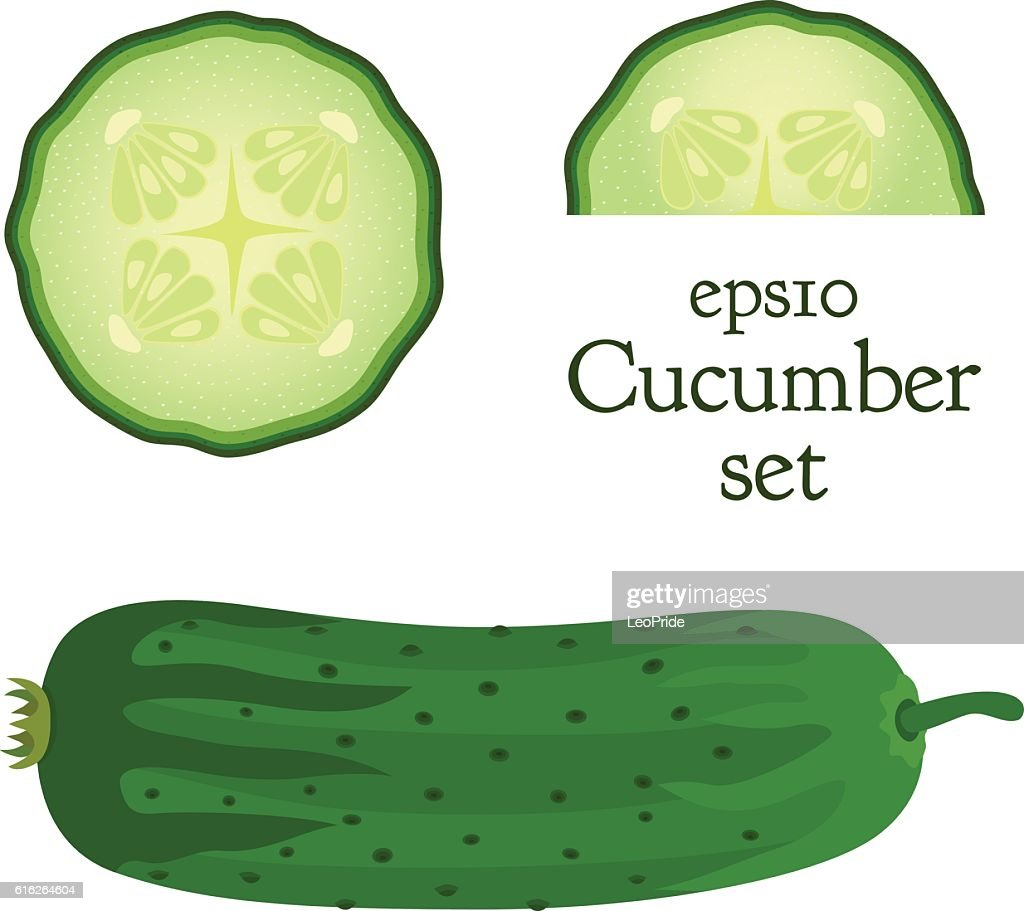 Vegetable, food illustration. Set of cucumber and slices. Flat style. : Vector Art