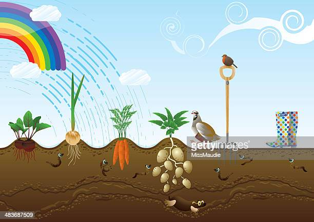 vegetable garden allotment landscape - common beet stock illustrations, clip art, cartoons, & icons