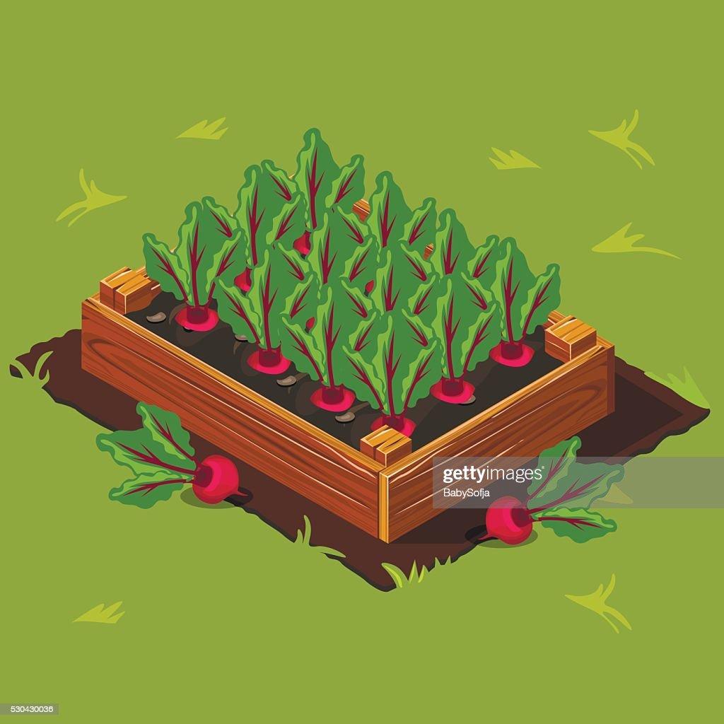 Vegetable Garden Box with Beet. Set 3