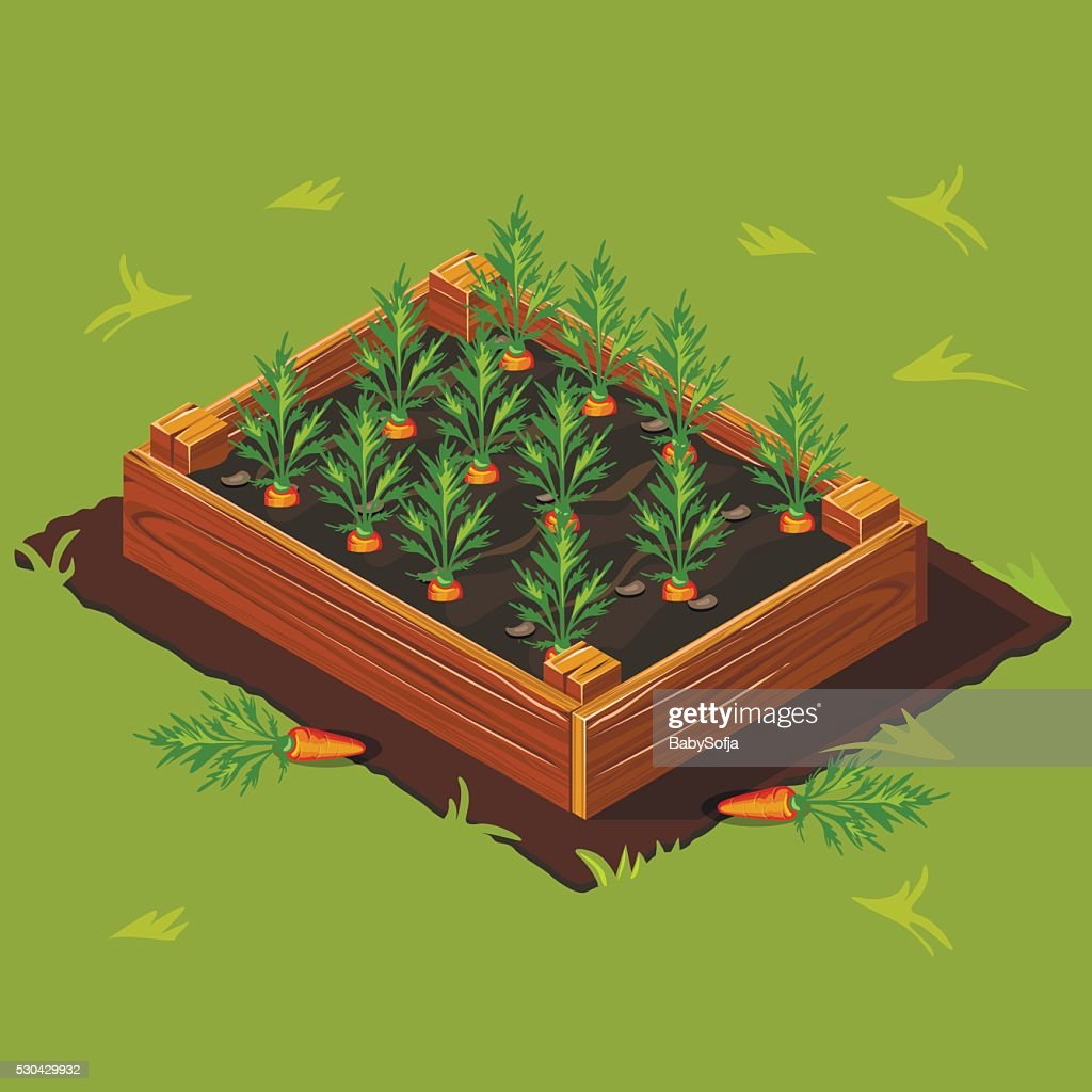 Vegetable Garden Box with Carrots. Set 1