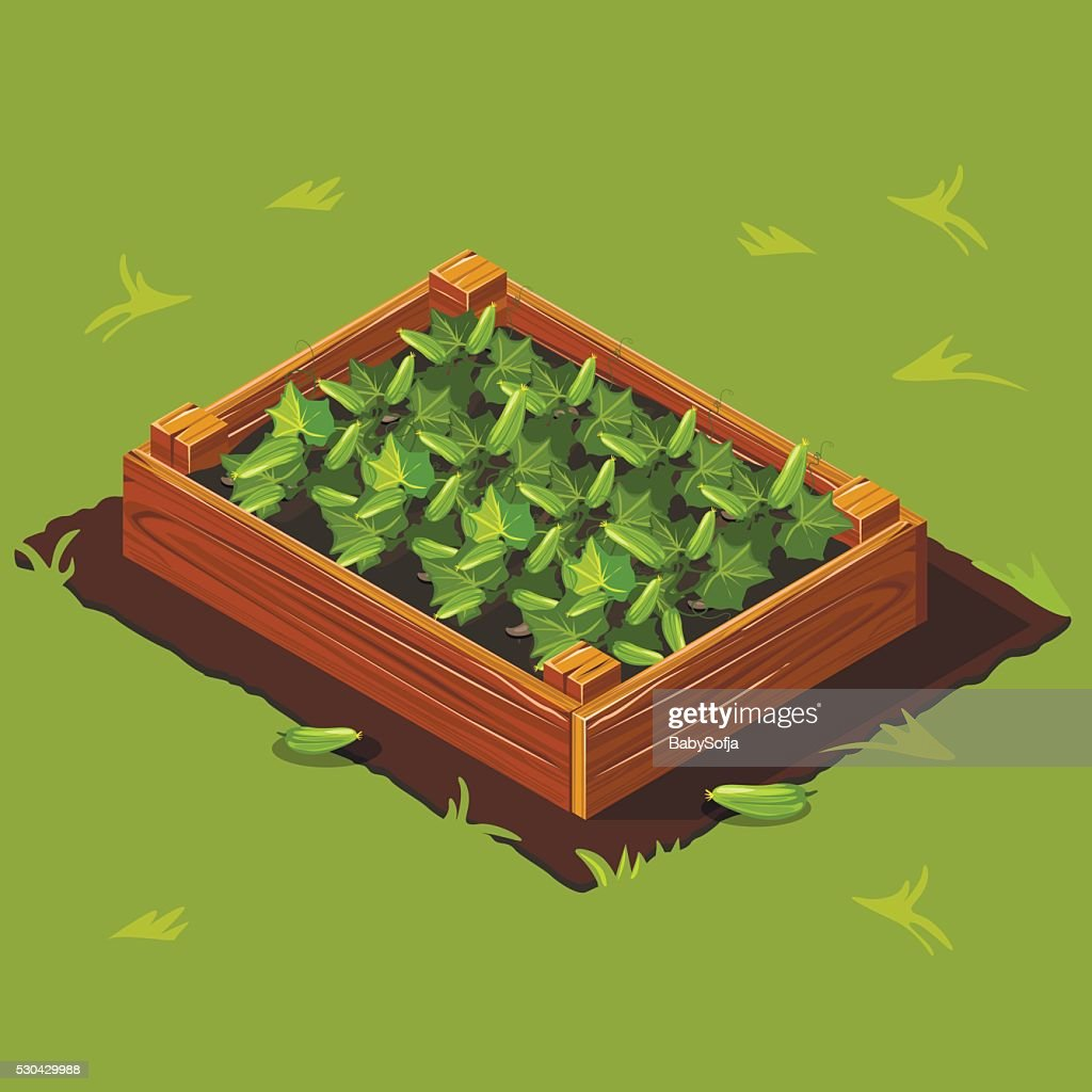 Vegetable Garden Box with Cucumbers. Set 2