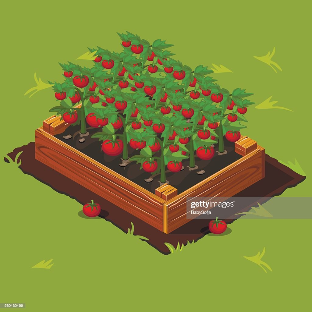 Vegetable Garden Box with Tomatoes. Set 4