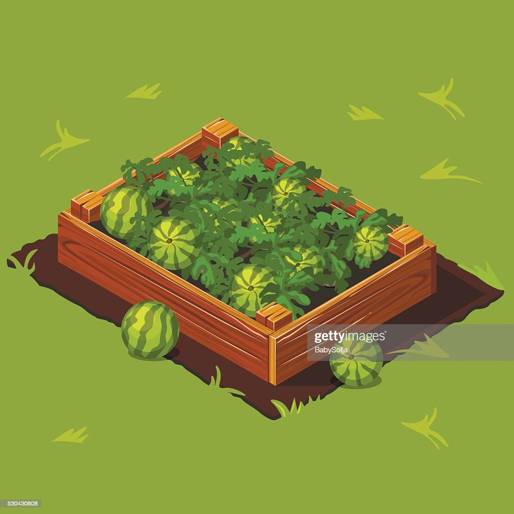 Vegetable Garden Box with Watermelons. Set 7