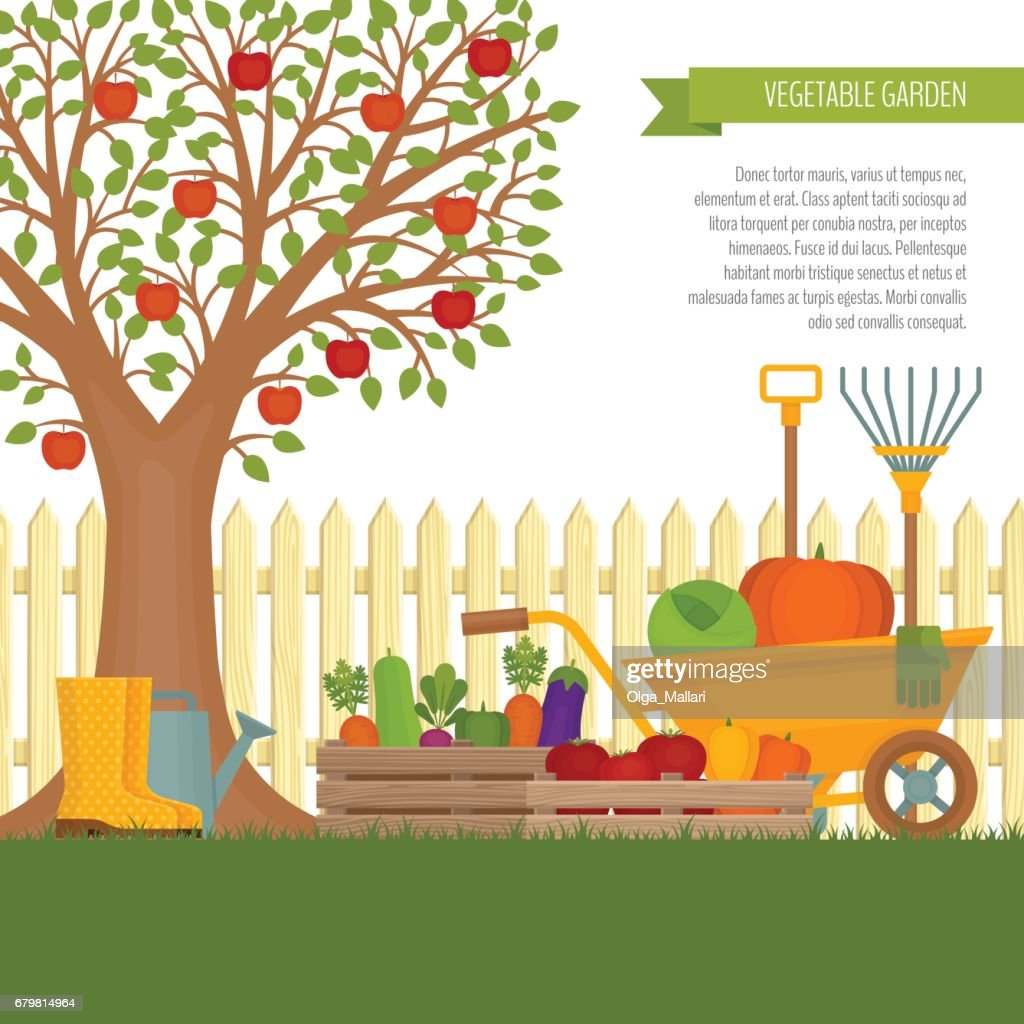 Vegetable garden. Concept of gardening. Banner with vegetable garden. Organic and healthy food. Flat style, vector illustration.