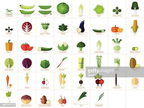 vegetable icons - white cabbage stock illustrations, clip art, cartoons, & icons