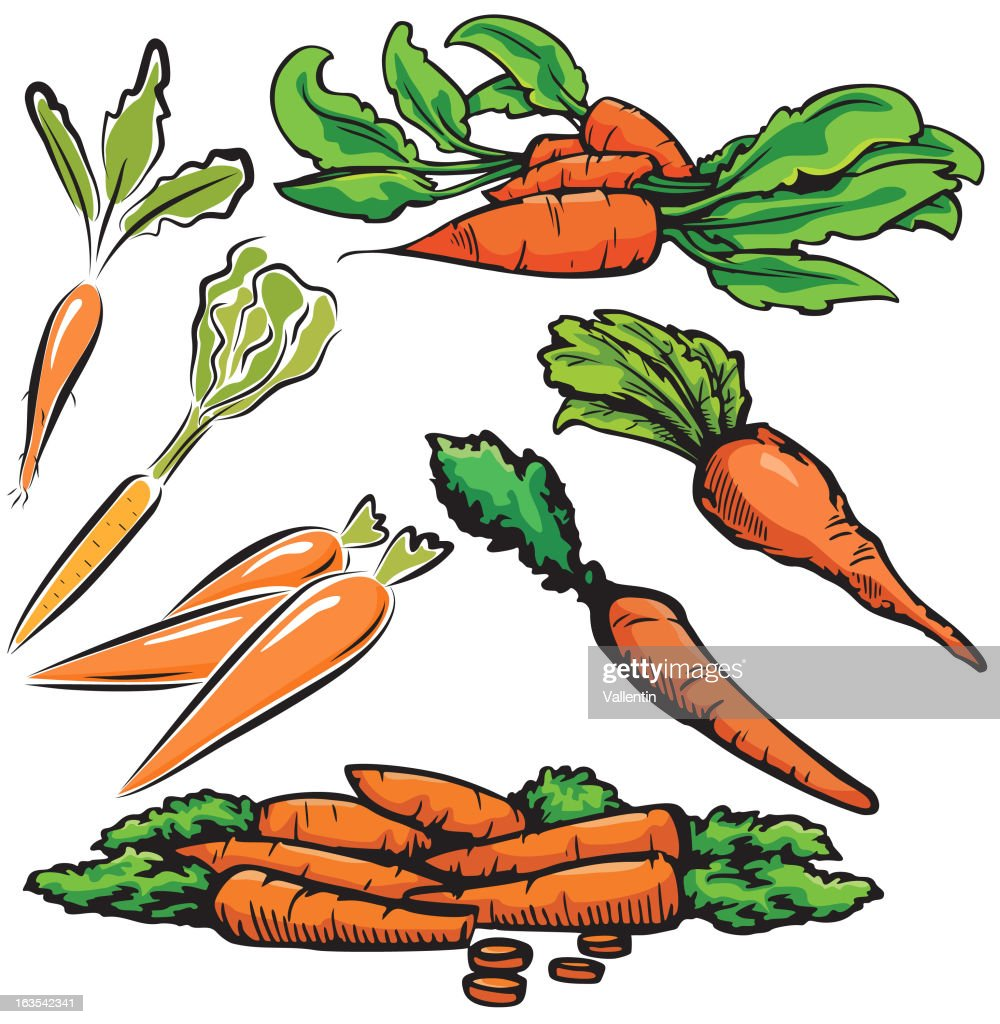 Vegetable Illustrations XII: Carrots (Vector)