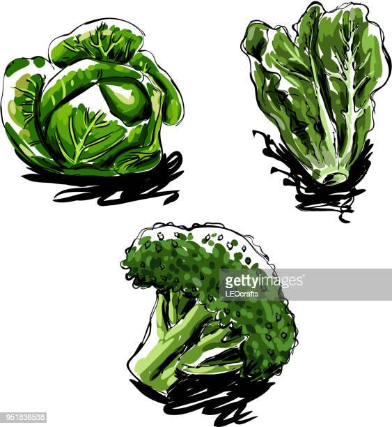 vegetables drawing - white cabbage stock illustrations, clip art, cartoons, & icons