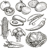 Vegetables, sketches, hand drawing