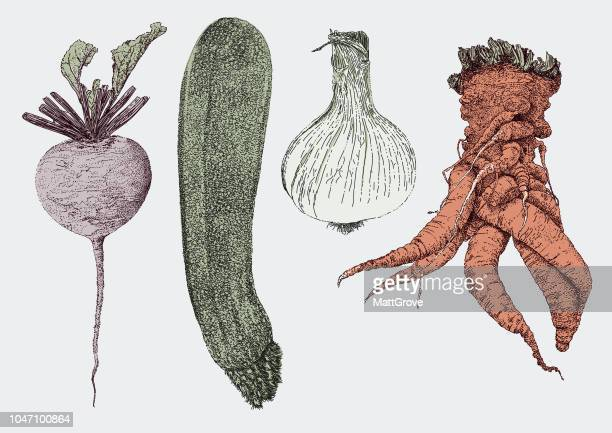 vegetables - common beet stock illustrations, clip art, cartoons, & icons