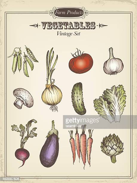 illustrations, cliparts, dessins animés et icônes de légumes - légume