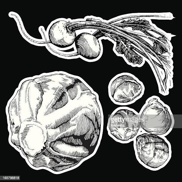 veggies, ink drawing - brussels sprout stock illustrations, clip art, cartoons, & icons