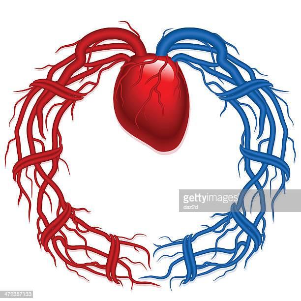 vein wreath - artery stock illustrations, clip art, cartoons, & icons