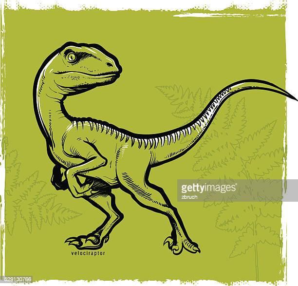 velociraptor - bird of prey stock illustrations, clip art, cartoons, & icons