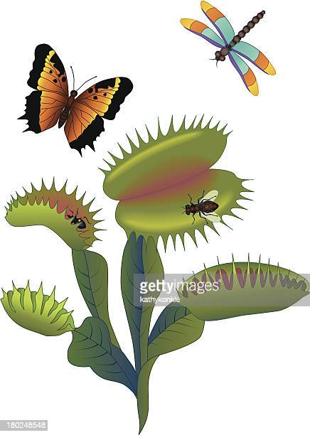 venus fly trap and insects - venus flytrap stock illustrations, clip art, cartoons, & icons