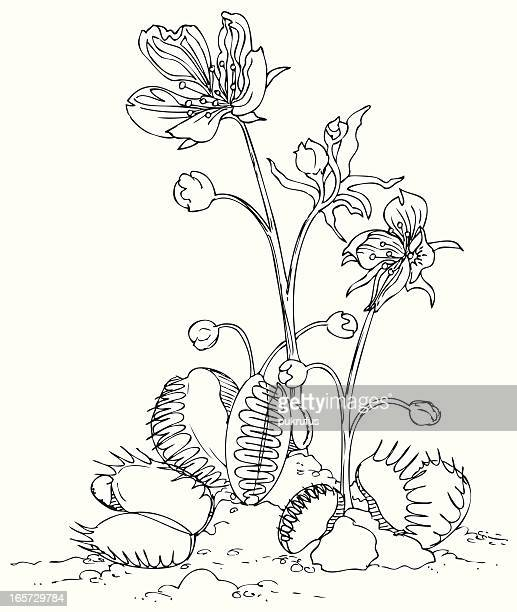 venus fly trap in black and white - venus flytrap stock illustrations, clip art, cartoons, & icons