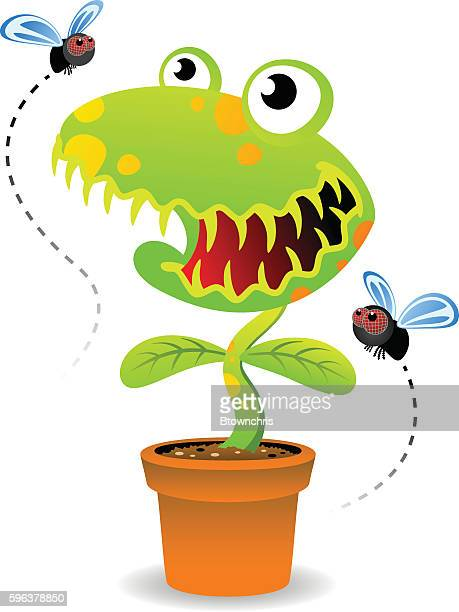 venus fly trap - venus flytrap stock illustrations, clip art, cartoons, & icons